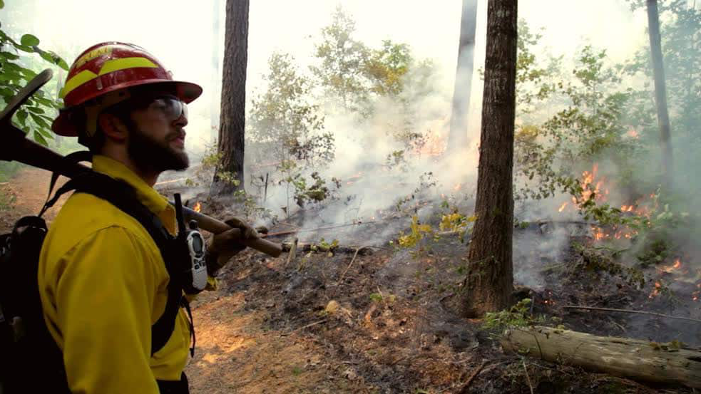 A firefighter oversees a controlled forest burn.
