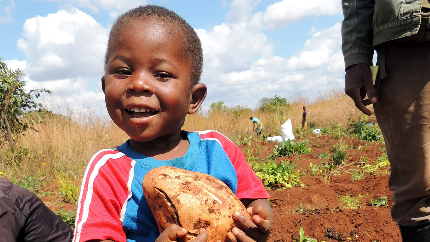A young boy in a field cradling a sweet potato.